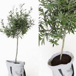 تحميل موديلات  517 Plant نبات