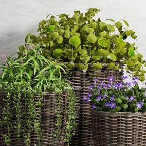 تحميل موديلات  519 Plant نبات