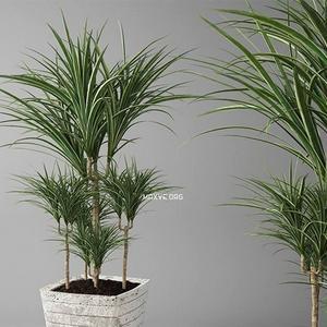 تحميل موديلات  520 Plant نبات