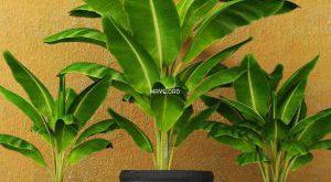 تحميل موديلات  523 Plant نبات