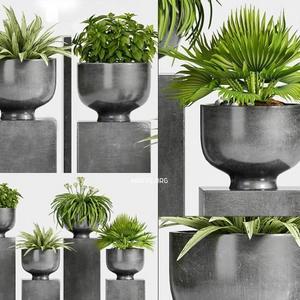 تحميل موديلات  525 Plant نبات