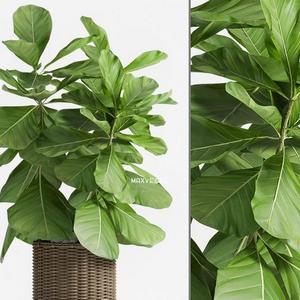 تحميل موديلات  526 Plant نبات