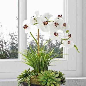 تحميل موديلات  528 Plant نبات