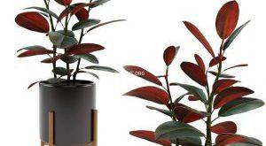 تحميل موديلات  530 Plant نبات