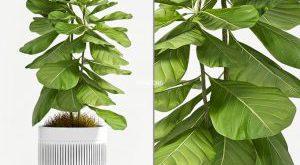 تحميل موديلات  531 Plant نبات