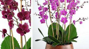 تحميل موديلات  533 Plant نبات