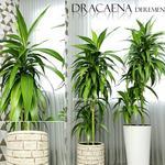 تحميل موديلات  536 Plant نبات