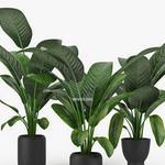 تحميل موديلات  537 Plant نبات