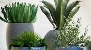 تحميل موديلات  541 Plant نبات