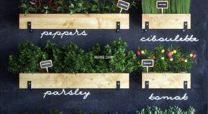 تحميل موديلات  544 Plant نبات
