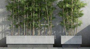تحميل موديلات  546 Plant نبات