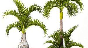 تحميل موديلات  554 Plant نبات
