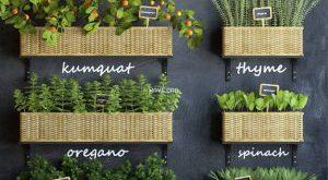 تحميل موديلات  557 Plant نبات