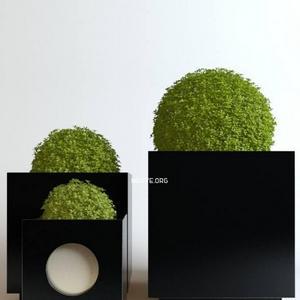 تحميل موديلات  558 Plant نبات