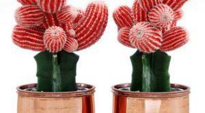 تحميل موديلات  561 Plant نبات
