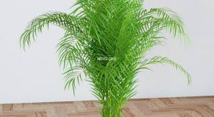 تحميل موديلات  32 Plant نبات