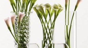 تحميل موديلات  562 Plant نبات