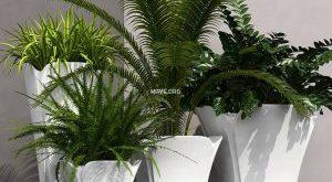 تحميل موديلات  564 Plant نبات