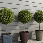 تحميل موديلات  673 Plant نبات