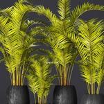 تحميل موديلات  571 Plant نبات