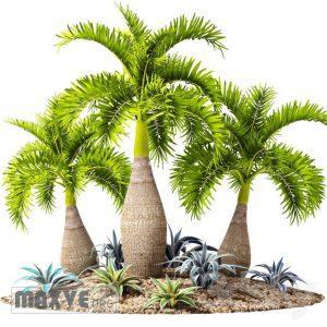 تحميل موديلات  576 Plant نبات