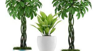 تحميل موديلات  579 Plant نبات