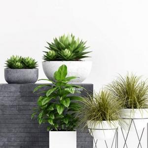 تحميل موديلات  583 Plant نبات