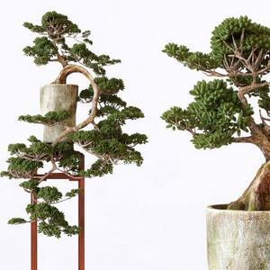 تحميل موديلات  585 Plant نبات