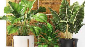 تحميل موديلات  586 Plant نبات