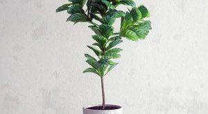 تحميل موديلات  588 Plant نبات