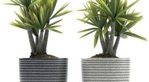تحميل موديلات  590 Plant نبات