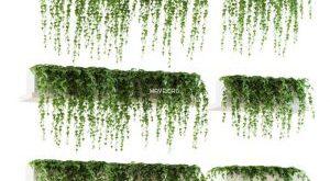 تحميل موديلات  591 Plant نبات