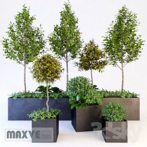 تحميل موديلات  594 Plant نبات
