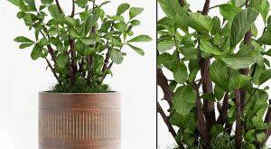 تحميل موديلات  600 Plant نبات