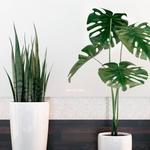 تحميل موديلات  601 Plant نبات