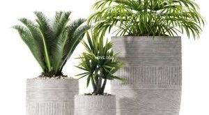 تحميل موديلات  605 Plant نبات