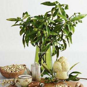 تحميل موديلات  609 Plant نبات