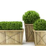 تحميل موديلات  685 Plant نبات