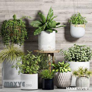 تحميل موديلات  692 Plant نبات