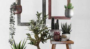 تحميل موديلات  691 Plant نبات